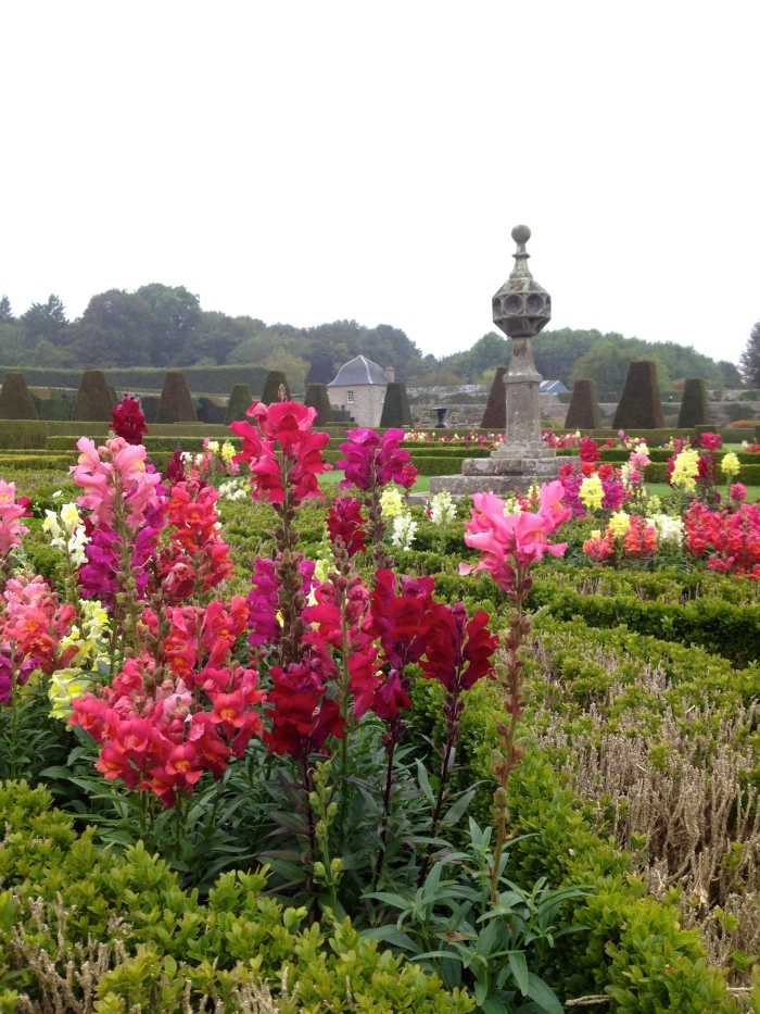 Beautiful snapdragons at Pitmedden Gardens