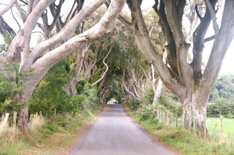 The Dark Hedges, looking not so dark at this moment.