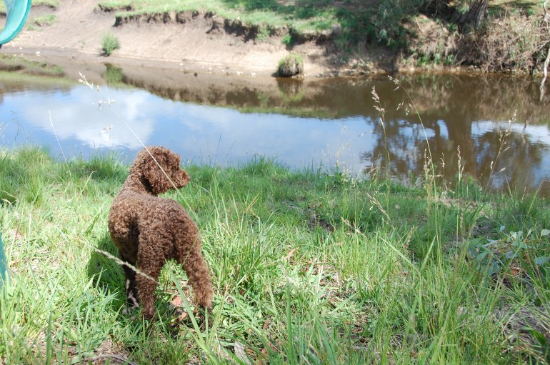 Poppy keeping an eye out for platypus.