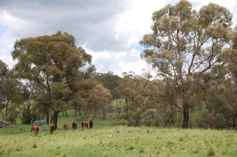 The ponies enjoying their holidays, avoiding human contact as much as possible