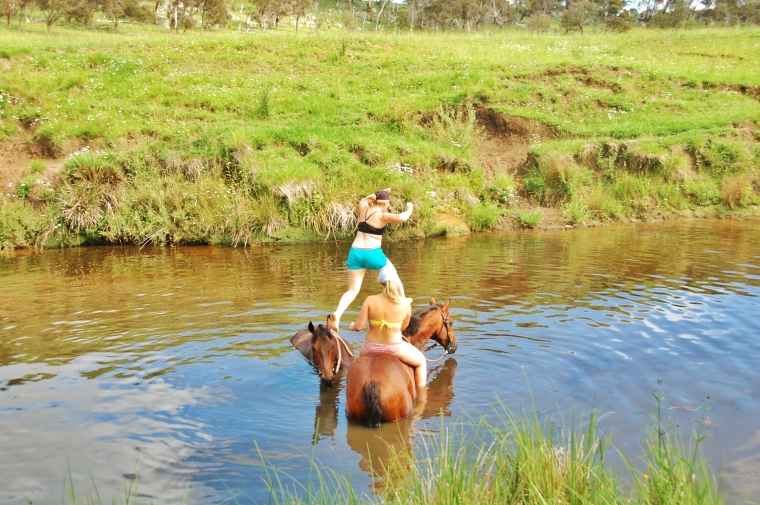 Roped the horses in for a swim.